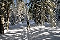Crosscountry skiing Mt Hood National Forest-2 (37003600586).jpg
