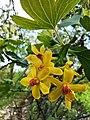 Currant flowers, Rind, Armenia 01.jpg