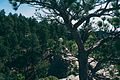 Custer State Park by Tristan Loper 20110822-00001 (32566113123).jpg