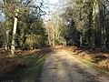 Cyclepath through New Park Plantation - geograph.org.uk - 1660802.jpg