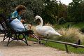 Cygne au parc Montsouris.jpg