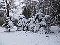 Cyril Hart Arboretum - Alpine Pines - Jan 2013 - panoramio.jpg