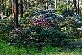 Dülmen, Welte, Rhododendronwald -- 2020 -- 6911.jpg
