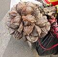 Dừa nước (Nypa fruticans).jpg