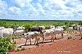 DSC 4164 Reserva Agricula Rio Geba, Bafata Guiné-Bissau 09.jpg
