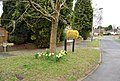 Daffodils at the beginning of Sussex Close - geograph.org.uk - 1224812.jpg