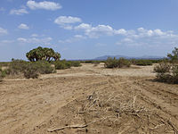 Danakil-Végétation.jpg