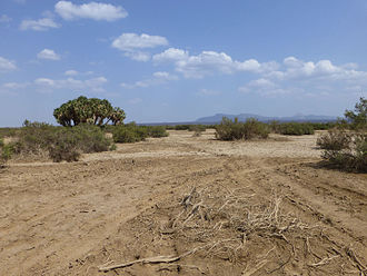 Ledi-Geraru - A view in the Afar Region, which contains the Ledi-Geraru site