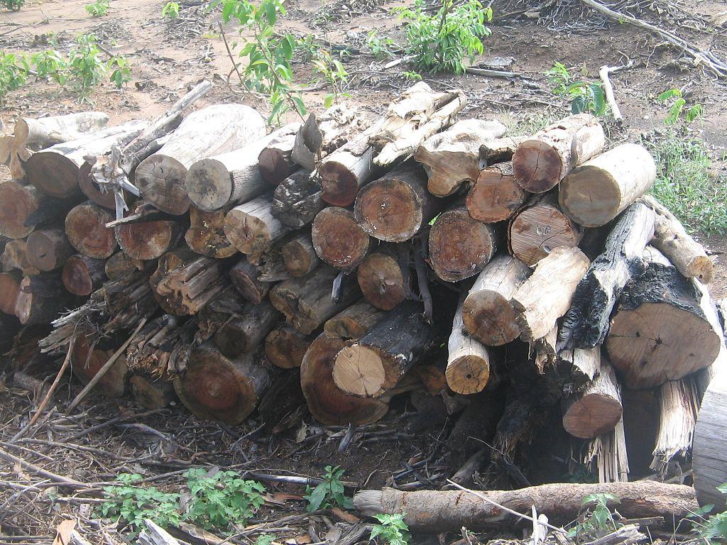 Degradação Florestal Amazônia 09.jpg