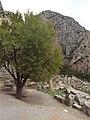 Delphi 041.jpg