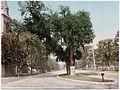 Detroit Photographic Company (0380).jpg