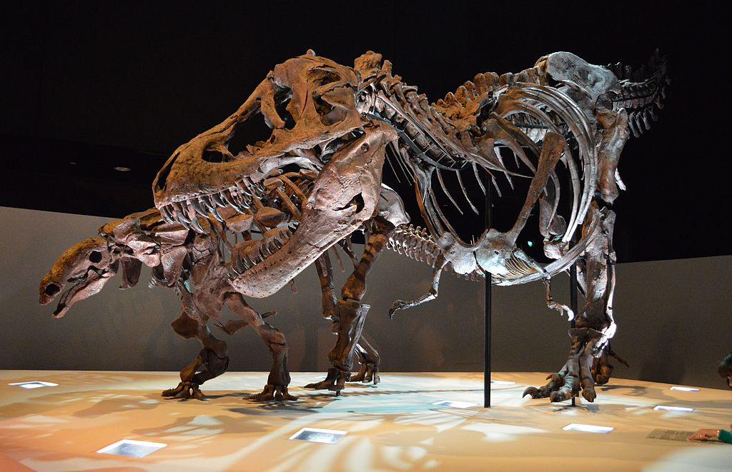 Houston Museum of Natural Science - Virtual Tour – Joy of Museums Virtual Tours