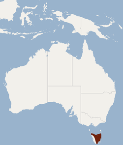 Distribution of Nyctophilus sherrini.png