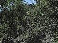 Divoká Šárka - panoramio (31).jpg