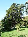 Dolmabahçe Palace Garden - Istanbul, 2014.10.24 (14).JPG