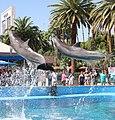 Dolphins 1 (15377279037).jpg
