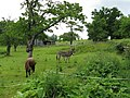 Donkey paddock at the Fox and Hounds - geograph.org.uk - 840284.jpg