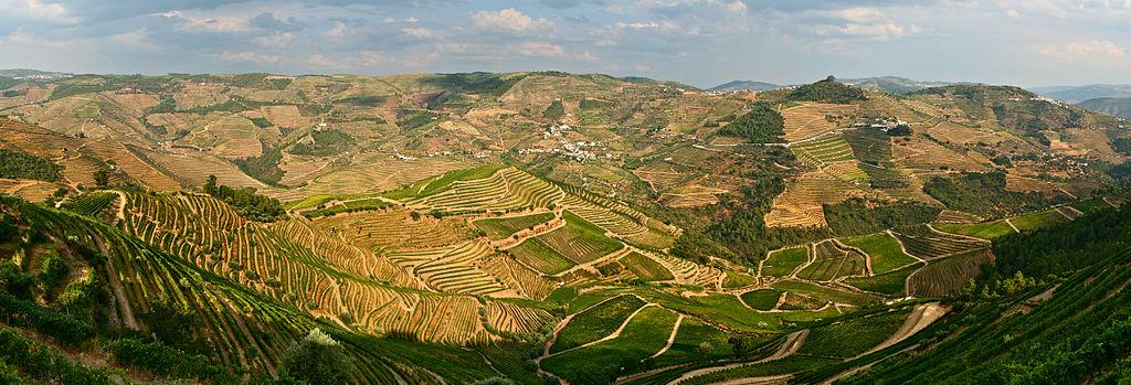 Blick auf die Weinterrassen im UNESCO-Welterbe Weinregion Alto Douro. Douro Wineyard Terraces