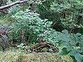 Dovhorakivskyi Botanical Reserve (2019.05.26) 02.jpg