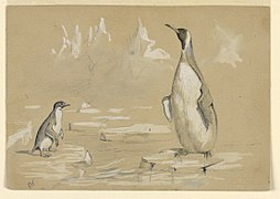 Drawing, Penguins on an ice floe, 1884 (CH 18426009).jpg