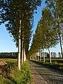 Dreef nabij Etbos, Moerbeke - panoramio.jpg