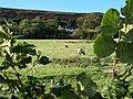 Dryhill Farm - geograph.org.uk - 256360.jpg