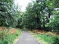 Dulwich Woods.jpg