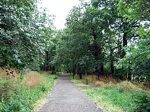 Great North Wood - Modern-day Dulwich Woods