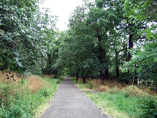 Dulwich Woods