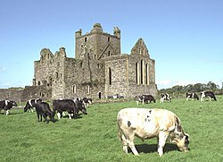 Dunbrody Abbey SE and Young Bulls 1997 08 27.jpg