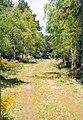 Dunrobin Woods - geograph.org.uk - 296670.jpg