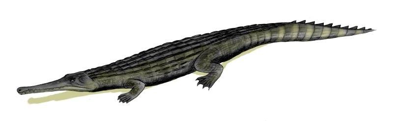 Dyrosaurus BW