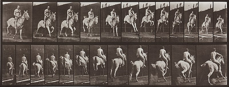 File:Eadweard Muybridge - Animal Locomotion, Plate 646 - Google Art Project.jpg