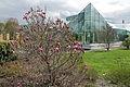 Edvard Andersons växthus-IMG 1654.jpg