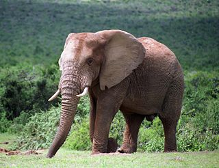 Addo Elephant National Park A diverse wildlife conservation park near Port Elizabeth in the Eastern Cape, South Africa