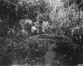 En lådformigt urholkad sten i en skogsdunge nära Mohapi. Sulawesi. Indonesien - SMVK - 000345.tif