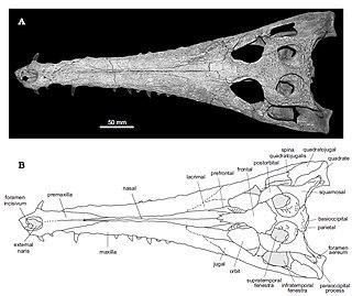 <i>Eosuchus</i>