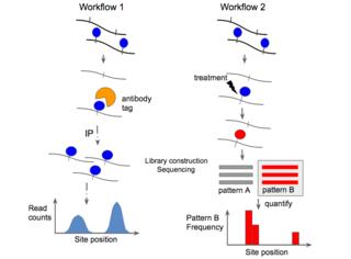 Epitranscriptomic sequencing