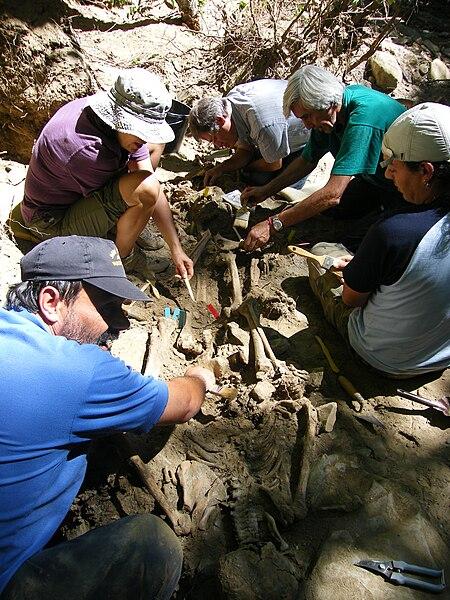Exhumación ARMH.jpg
