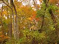 Fall Colors in Rock Creek Park - Flickr - treegrow (1).jpg