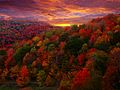 Fall Foliage Photography.jpg