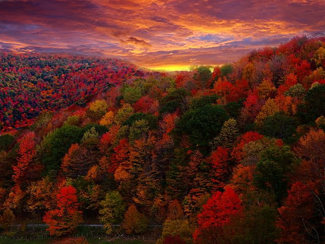 sunset on fall foliage