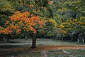 Fall colors 02 - Lake View Cemetery - 2015-10-12 (22277423452).jpg