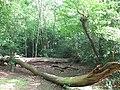 Fallen trees on Eltham Common - geograph.org.uk - 1297311.jpg
