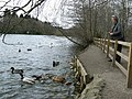 Feeding waterfowl - geograph.org.uk - 373307.jpg