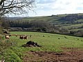 Field above Blagdon - geograph.org.uk - 758633.jpg