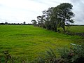 Field and Trees Near Cockpool - geograph.org.uk - 565435.jpg