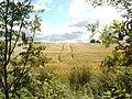 Field in Damhead - geograph.org.uk - 508695.jpg
