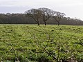 Field south of Bergerie Farm - geograph.org.uk - 346825.jpg