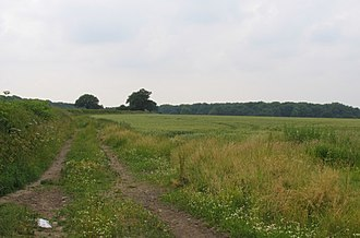 Burbage Wood and Aston Firs - Image: Fields and Woods geograph.org.uk 193678